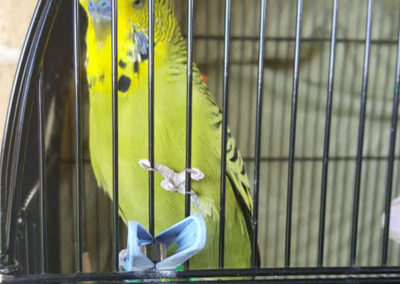 Vicki-pet-sitting-dog-walking-budgie-600