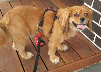 Vicki-pet-sitting-dog-walking-orange-2-600