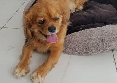 Vicki-pet-sitting-dog-walking-orange-600